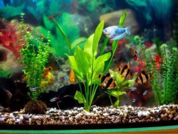 Best aquarium water conditioner