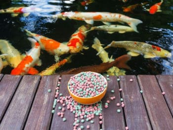 Best Koi Food for Color, Growth and Nutrition Reviews