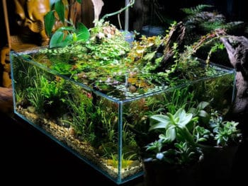 Best Live and Fake Plants for Betta Fish