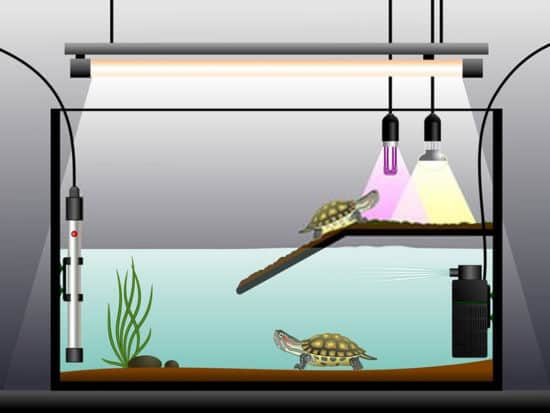 Best turtle tank filter buying guide