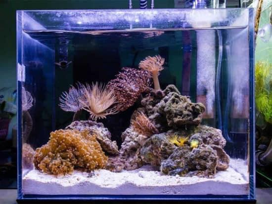Nano Reef Tank