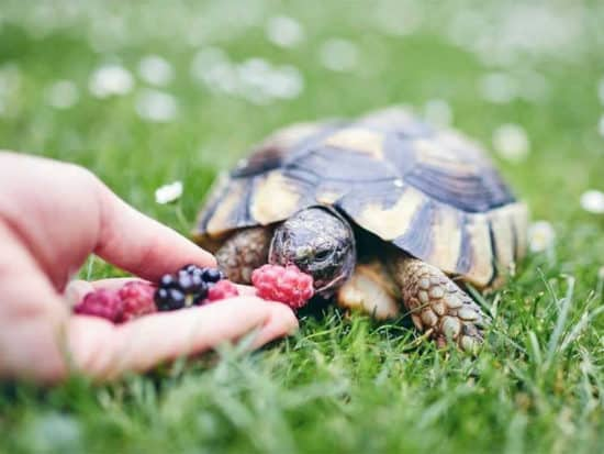 Turtles are omnivores