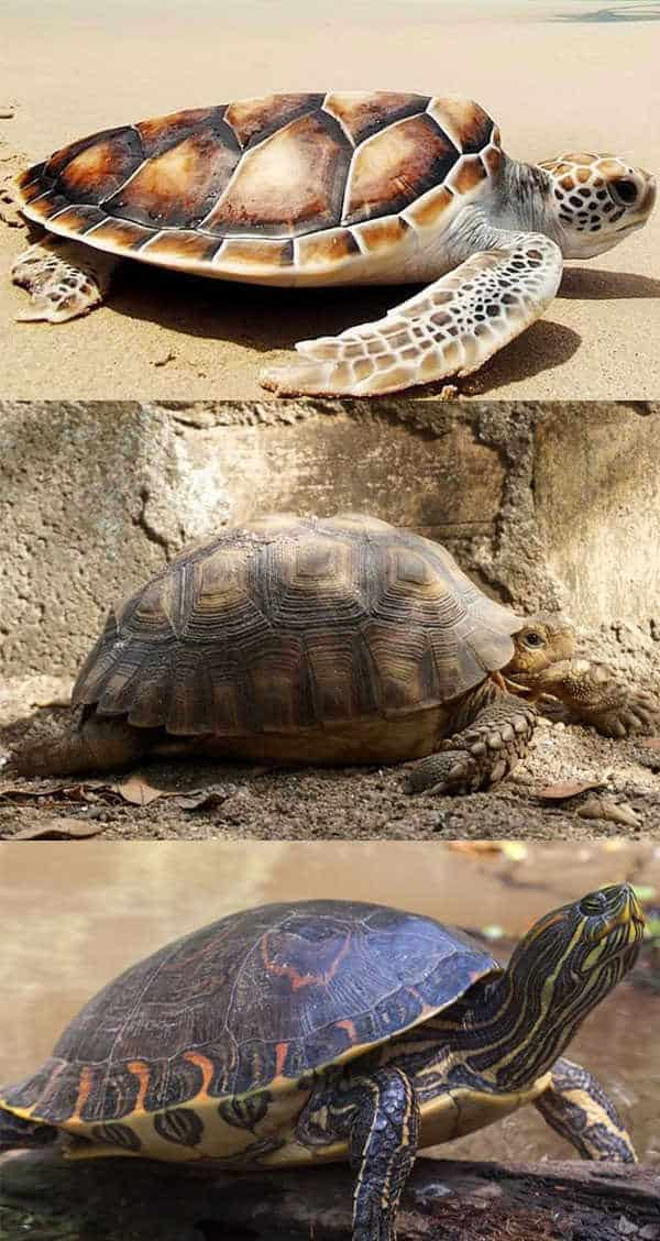 Types of Turtle Shell